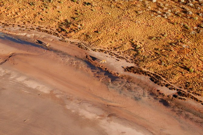 Scenic Flight: Lizard Safari