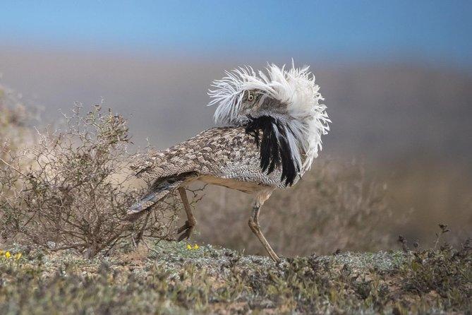 Bird Watching safari in Lanzarote