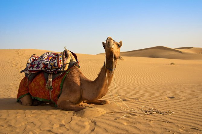 Desert Safari: Wahiba Sands and Wadi Bani Khalid from Muscat