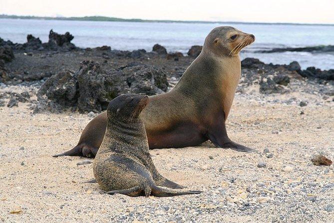 5-Day All-Inclusive Galapagos: Isabela and Santa Cruz Island