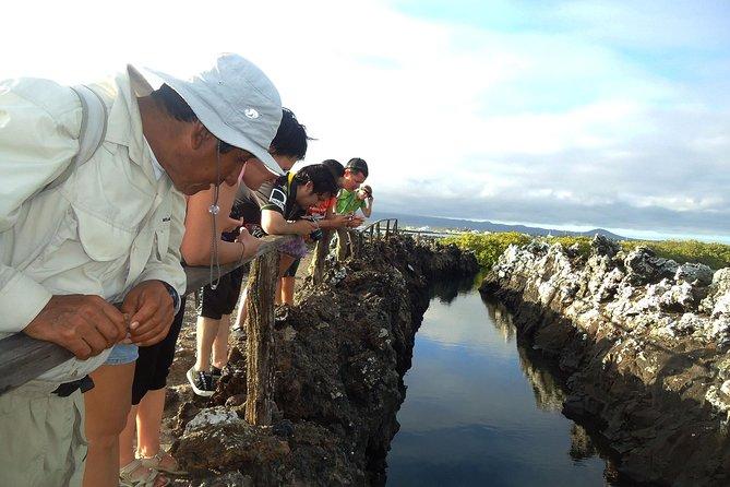 Half-Day Tour to Tintoreras Islet in Isabela Island - Galapagos