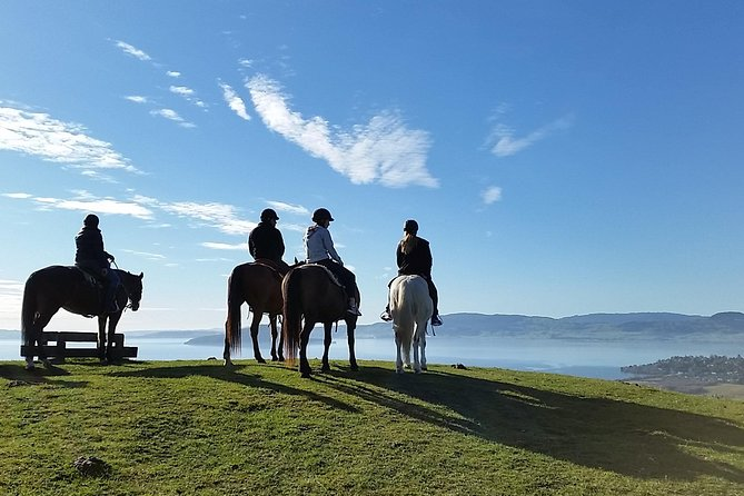 Guided Horse Trekking from Rotorua