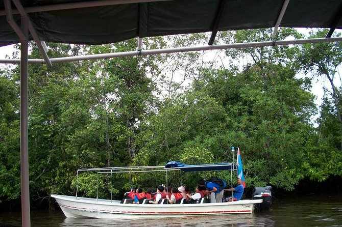 Half-Day Klias Wetland Cruise and Firefly Tour in Kota Kinabalu
