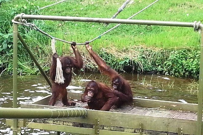 Orangutan & Charcoal Factory Tour photo 2