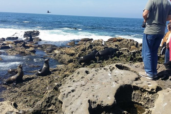 Full Day Tour of San Diego, La Jolla and the Beaches photo 9