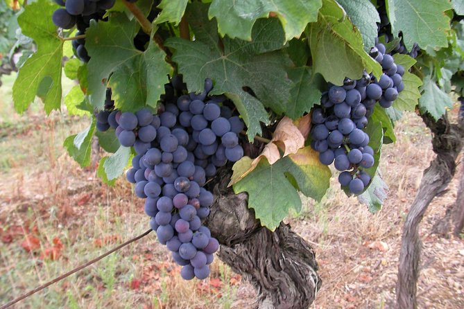 Gaillac Wine Half Day Tour from Toulouse