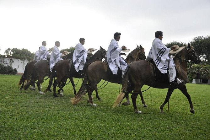 Peruvian Paso Horses Show Including Lunch