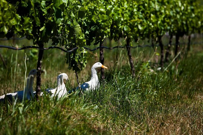 Organic & Biodynamic: A Sustainable Wine Experience photo 3
