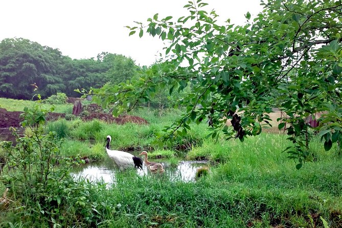 Japanese Red-Crowned Crane Observation Tour Summer - March to October - photo 1