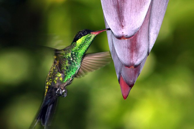 Rockland Bird Sanctuary Tour desde Montego Bay