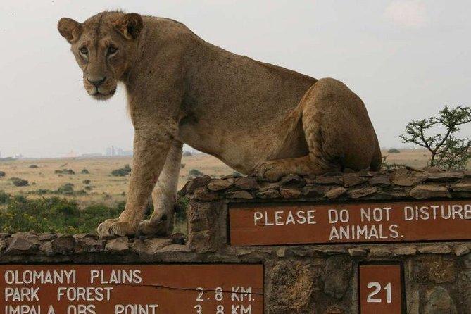 Nairobi National Park,Elephant Orphanage,Giraffe Centre,Karen Blixxen GuidedTour