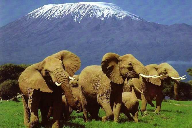 6 Days Amboseli, Lake Nakuru, Masai Mara Wildlife Safaris All Inclusive photo 1
