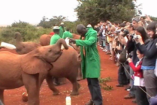 Nairobi Tour to David Shedrick at Elephant Orphanage