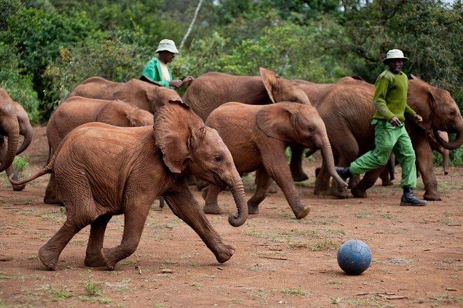 Half-Day Trip David Sheldrick Elephant Orphanage, Giraffe Centre Tour in Nairobi