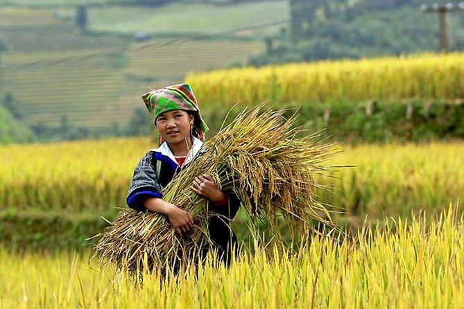 5-dages privat rundvisning i Vietnam bjergene fra Hanoi