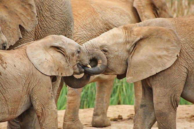 Addo Elephant National Park - a true delight!