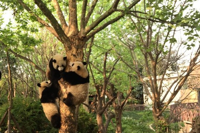 Chengdu Panda Tour with Flexible Afternoon Sightseeing