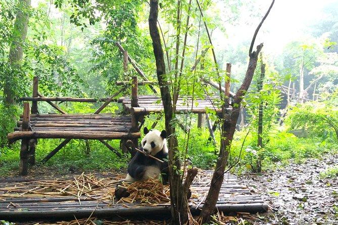 Chengdu Impressions Tour of Sichuan Cuisine Museum and Giant Pandas