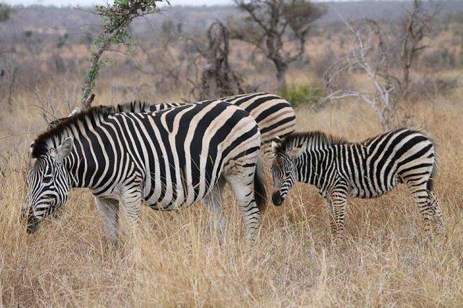 Full-Day Kruger Park Safari from Nelspruit, Whiteriver or Hazyview