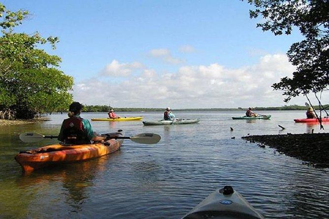 Happy Hour Kayak Tour in Sarasota