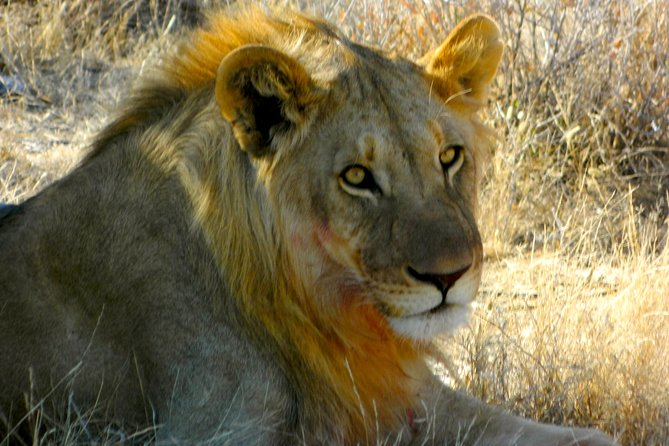 4 dias Parque Nacional de Etosha em uma excursão econômica a partir de Windhoek