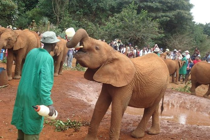 Elephant Orphanage and Giraffe Centre in Nairobi