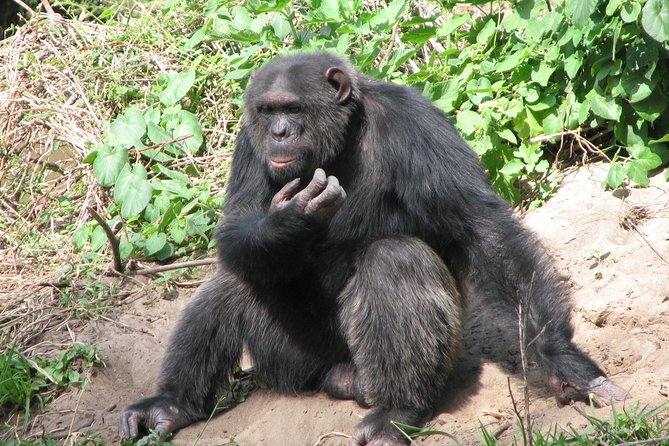 Full-Day Ol Pejeta Conservancy and Chimpanzee Sanctuary Tour from Nairobi
