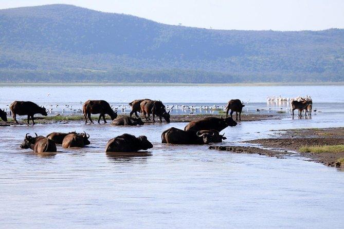 2 Day Tour Lake Nakuru, Hell' s Gate & Lake Naivasha From Nairobi