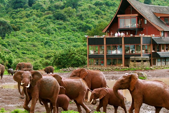 Private 5 Day Aberdare Lake Nakuru and Masai Mara Safari from Nairobi