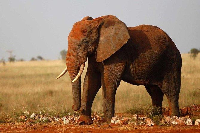 3-Days Tsavo West National Park Private Safari