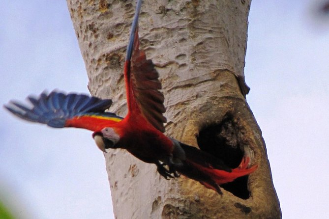 Bird Watch Tour in Ixpanpajul, Tikal or Taxha