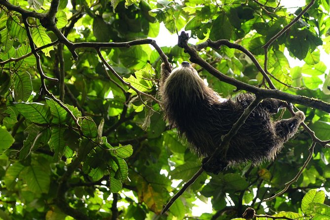 Mombacho Cloud Forest Reserve: Hike and Zipline Tour