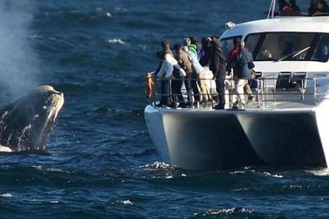 Full-Day Whale Watching and Wine Tasting Tour from Cape Town
