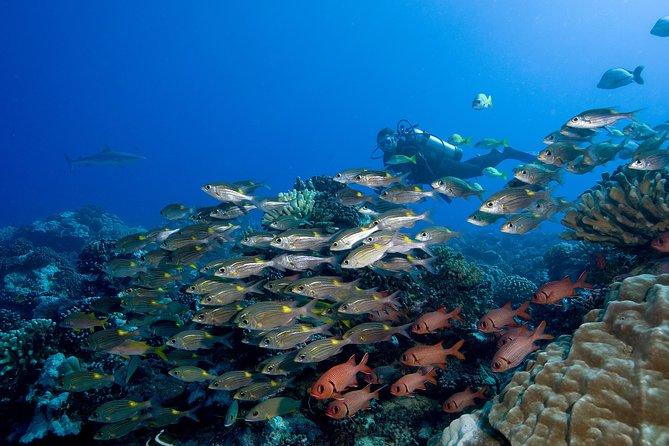 Bura Bora Fun Certified Scuba Dive