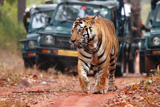 Parque Nacional Ranthambore: entrada sin colas al safari de día completo