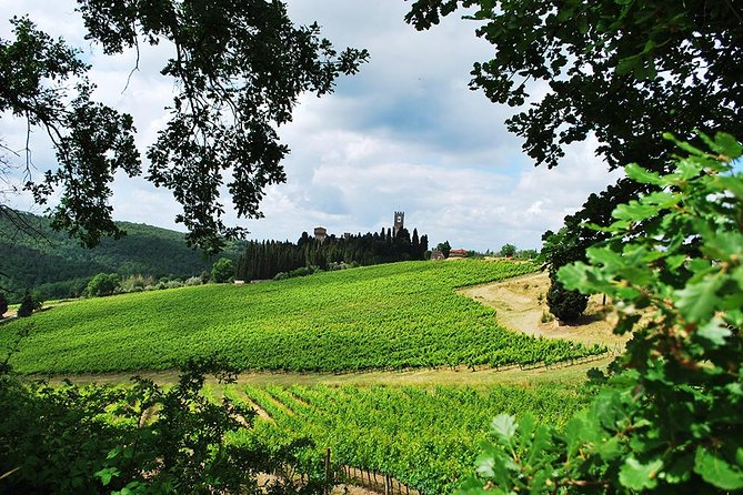 San Gimignano and Chianti Classico Wine and Food PRIVATE TOUR from Florence photo 3