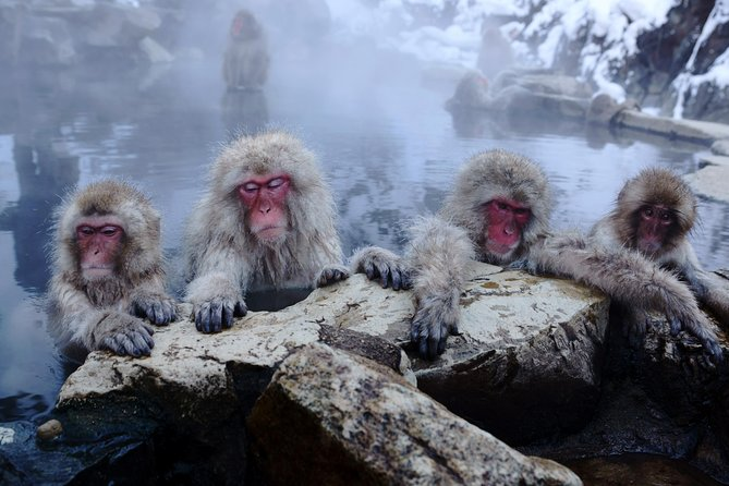 Snow Monkeys, Hot Springs and Zenkoji Temple Day Trip to Nagano from Tokyo