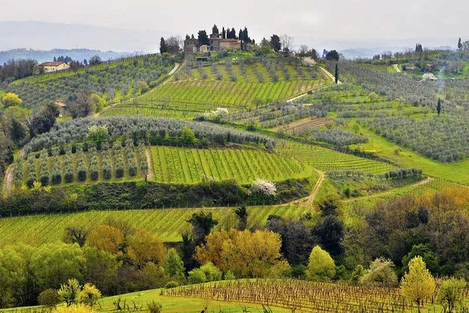 Private tour from Livorno port to Chianti wine region photo 7