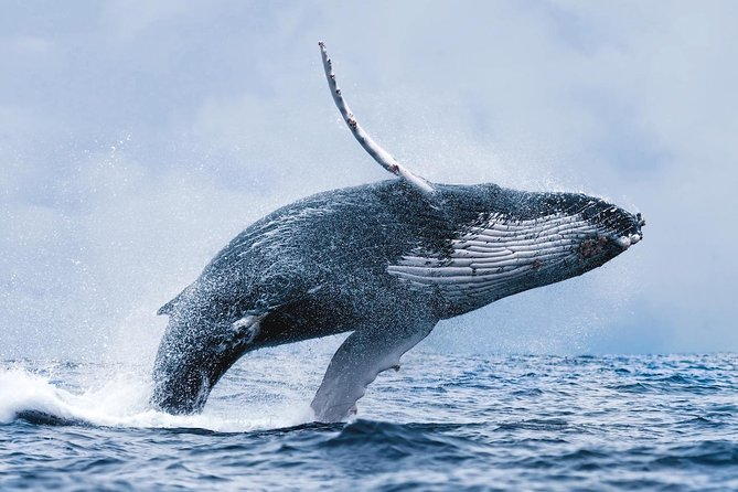 Whale Watching Tour from Reykjavik 2020