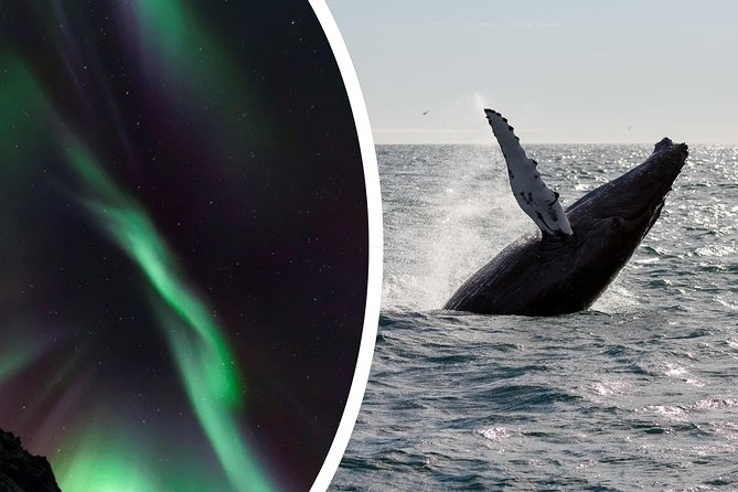 Half-Day Whale Watching and Northern Lights Combo Tour