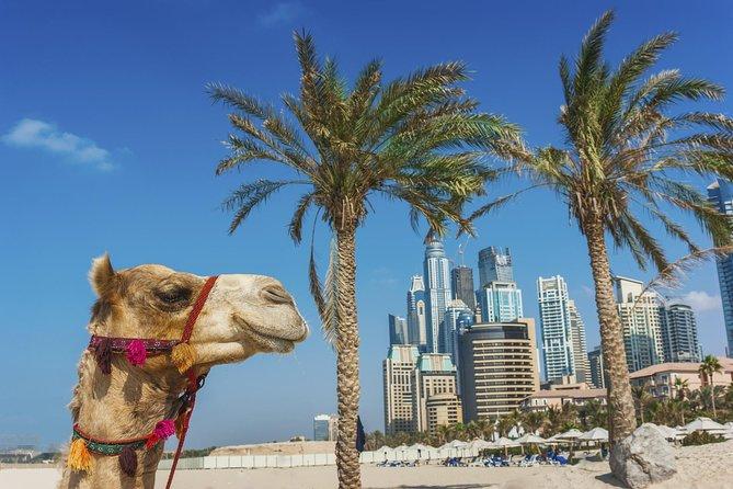 Dubai supereconômico: excursão turística à cidade e safári no deserto