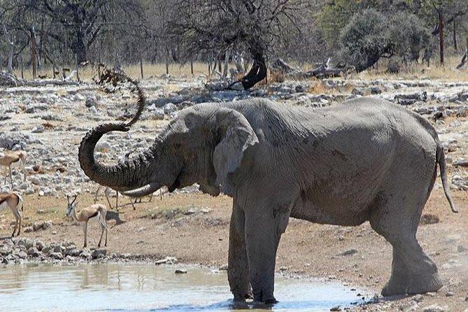 Drive Game di Etosha National Park di 3 ore