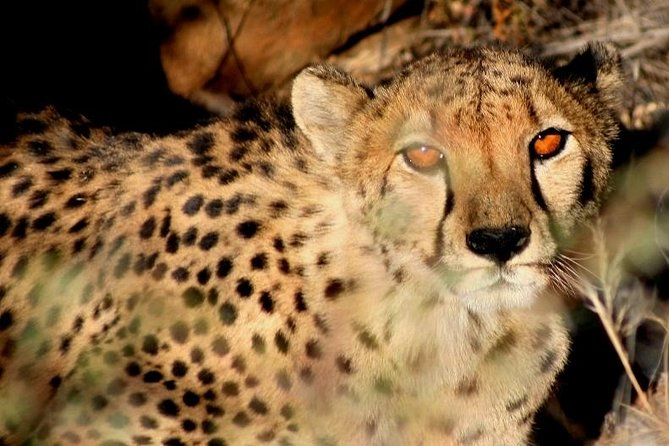 10-Day Namibia Hightlights Guided Tour from Windhoek