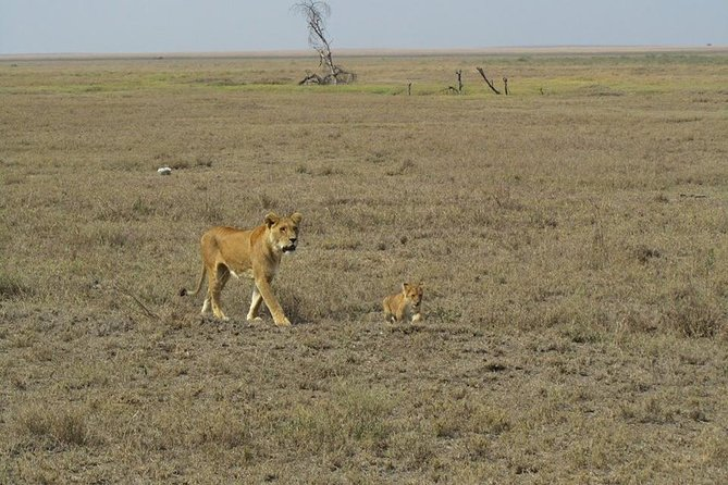 4 Days Safari Lake Manyara Serengeti and Ngorongoro Crater photo 3