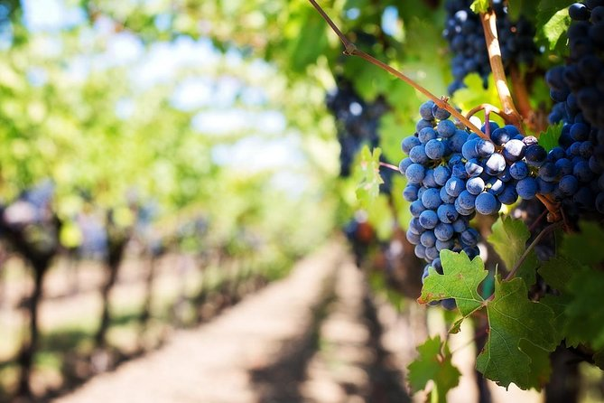 Full-Day Boutique Winery and Wine Tasting Tour from Fez