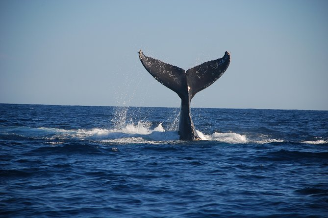 Majestetisk Whale Watching Adventure