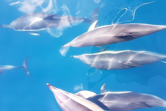 Dolphin & Wildlife Cruise - Half Day from Tauranga