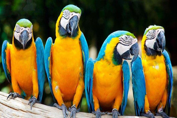 Aventure d'une durée de 3jours en Amazonie dans la réserve nationale Tambopata au départ de Puerto Maldonado, au Pérou