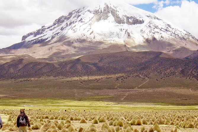 Sajama National Park Full-Day Tour from La Paz
