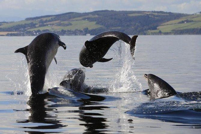 The Best of the Black Isle Small-Group Day Tour from Inverness